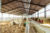 L'intérieur d'un hangar photovoltaïque Irisolaris