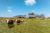 Hangar de panneau solaire réaliser pour des agriculteurs