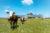 Luc son hangars agricole photovoltaïque construit dans sa prairie