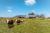 La toiture agricole du hangars solaire de Luc
