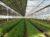 Serre photovoltaïque mise en place pour un agriculteur
